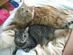 Maggie and Jasper snuggled together