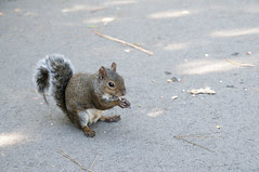 Squirrel, San Francisco Botanical Garden, Golden Gate Park