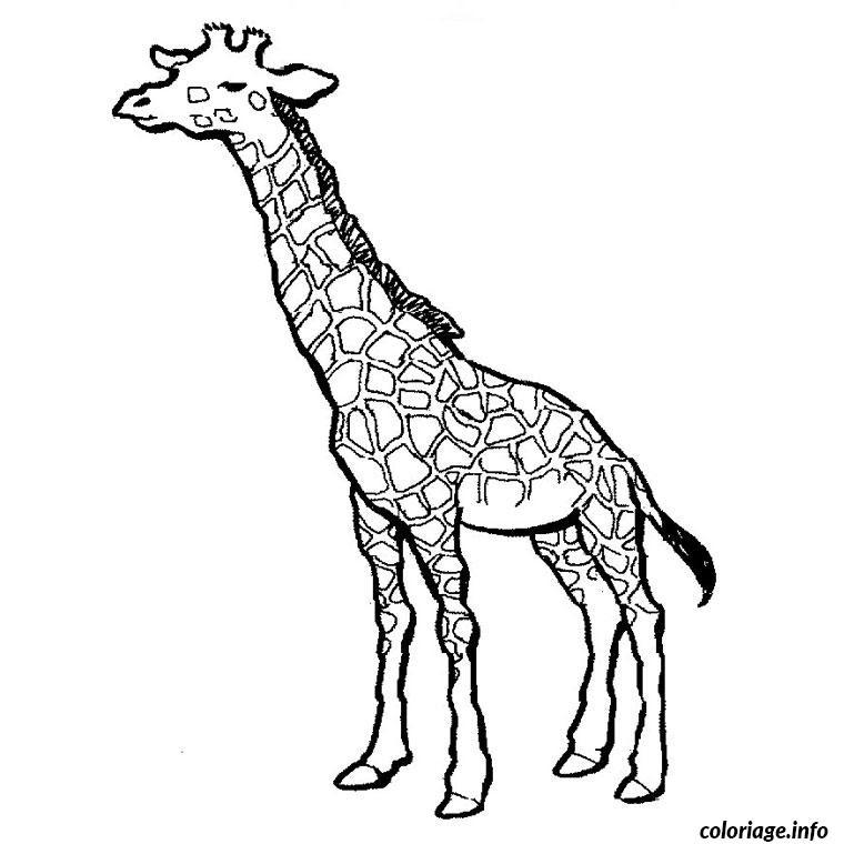 Coloriage Girafe Jecoloriecom