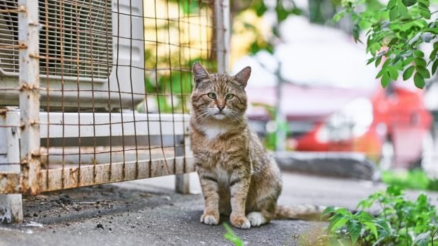 Estudio sobre los gatos de Pottenger: alimentación y enfermedades