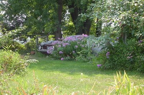 Flower Garden Barracuda
