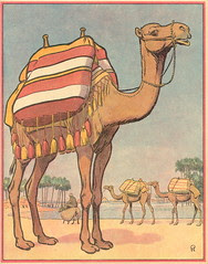 buff chameau