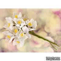 Набор цветов Prima - Hello Pastel Flower Stem - White - ScrapUA.com