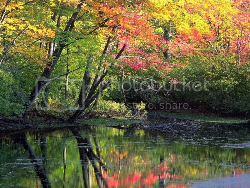 Beautiful Trees Pictures, Images and Photos