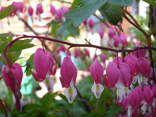 spring garden (15)