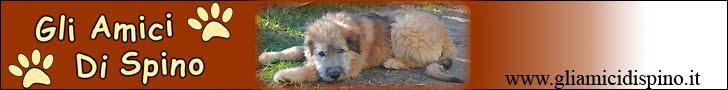 GliAmiciDiSpino - Il portale per cani abbandonati