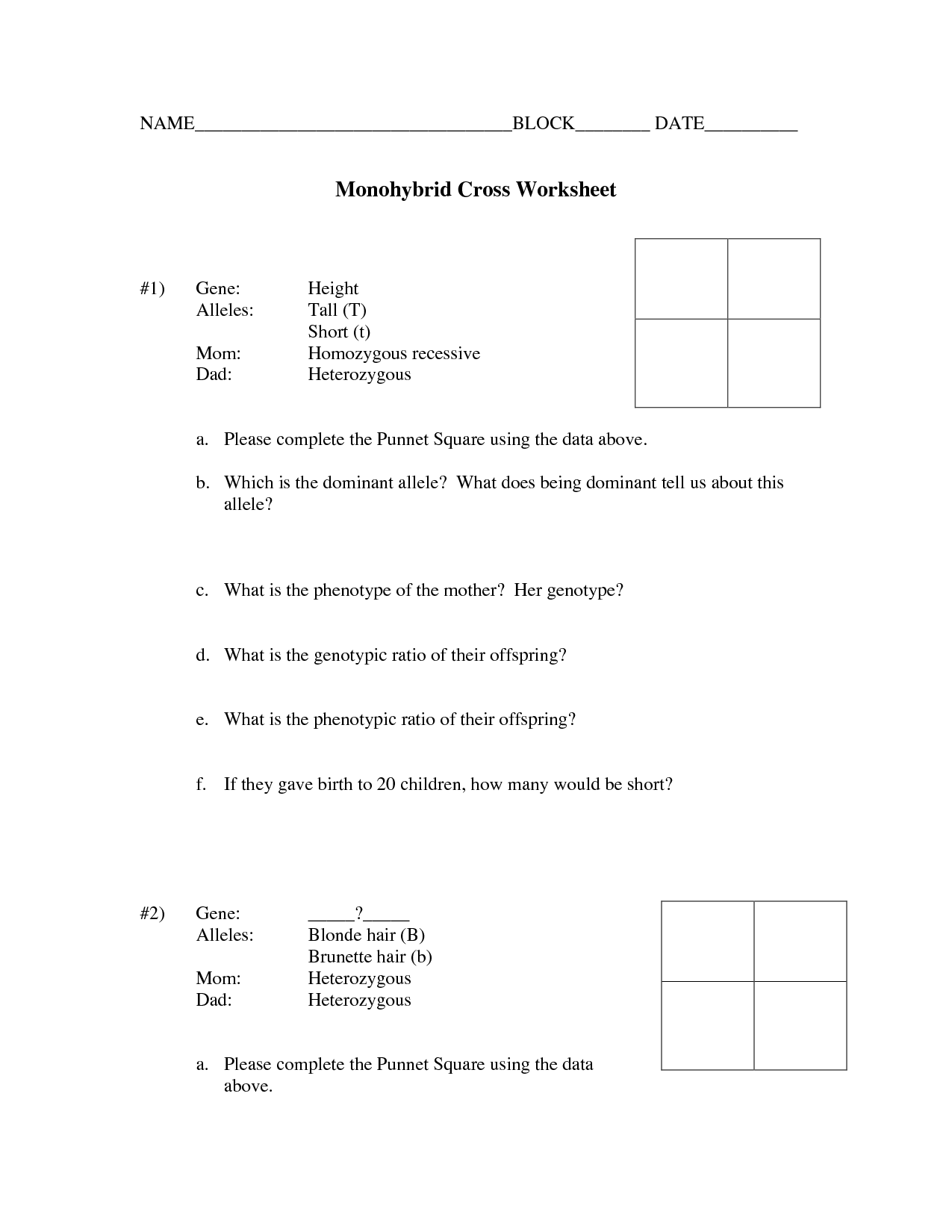 15 Best Images of Dihybrid Cross Worksheet Answers  Dihybrid Cross Worksheet Answer Key