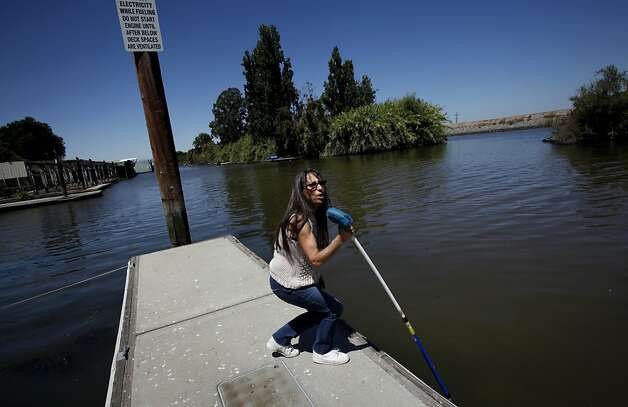 Korinne Flowers, who owns the Tracy Oasis Marina-Resort, uses a pole to show how low the water level is in Tracy, Calif., Friday, July 27, 2012.  Flowers is worried any plan to move water to existing pumps that supply water to Southern California, the Central Valley and the Bay Area will lower the water even more and hurt business. Photo: Sarah Rice, Special To The Chronicle / SF