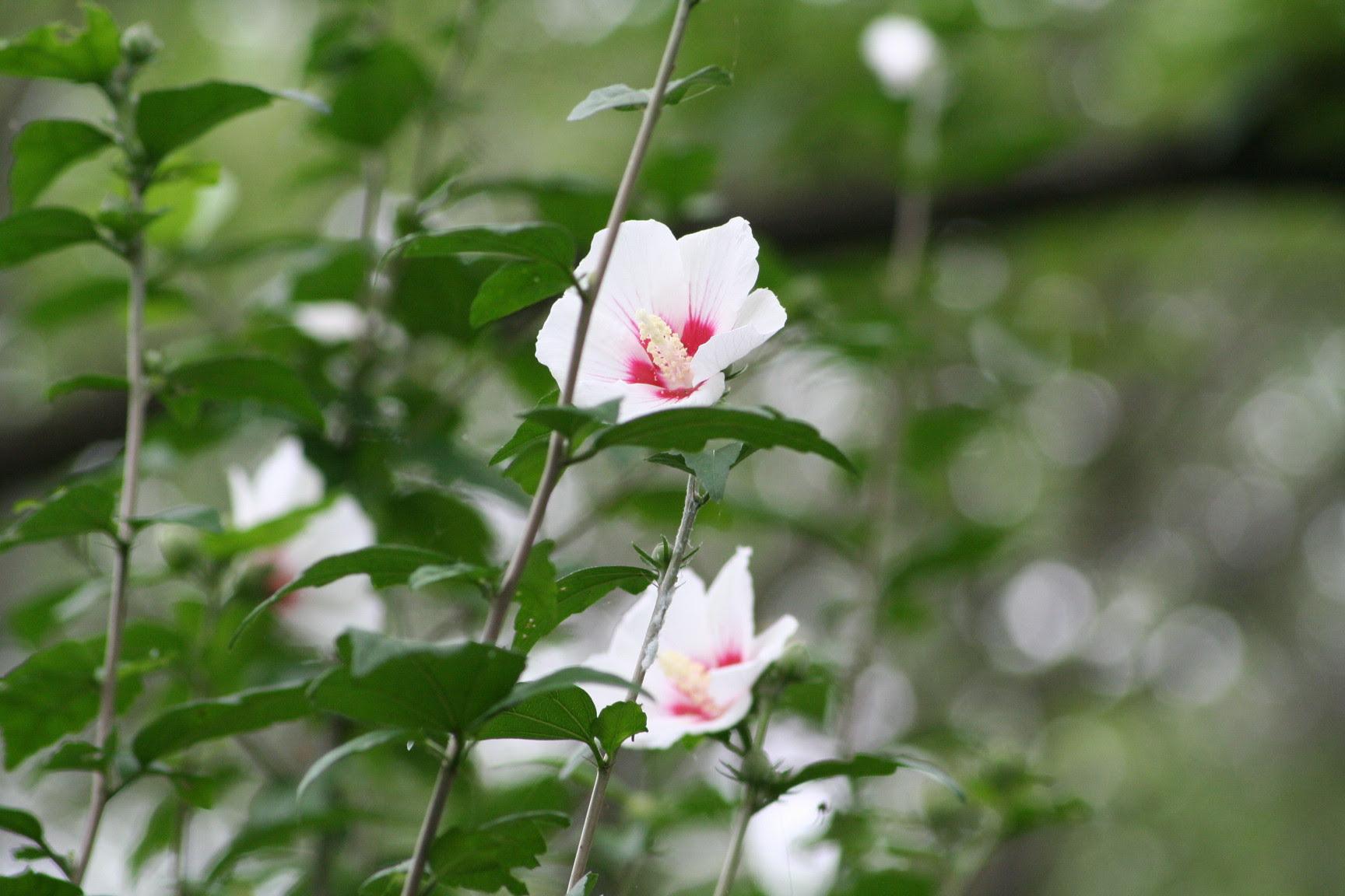 東武動物公園の花と自然公式ブログ7月の花その2