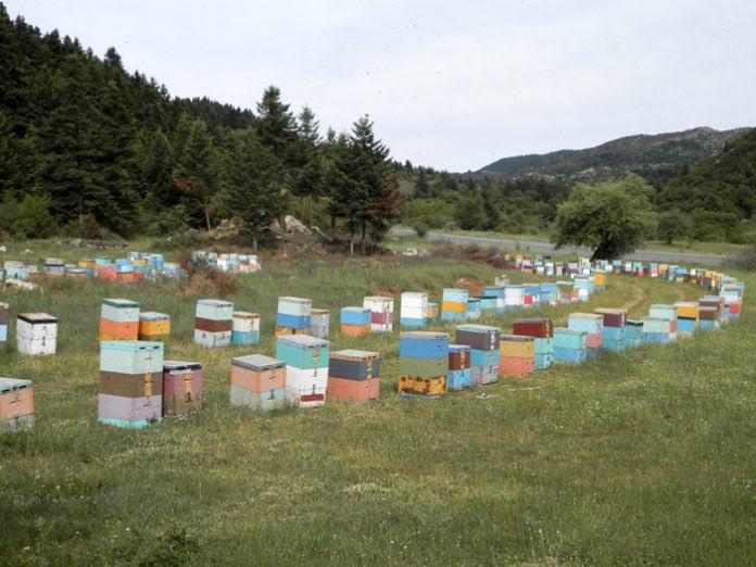 Αρκαδία: Το Μαίναλο δεν έδωσε –πάλι– μέλι
