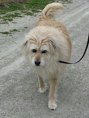 Annie going to the beach