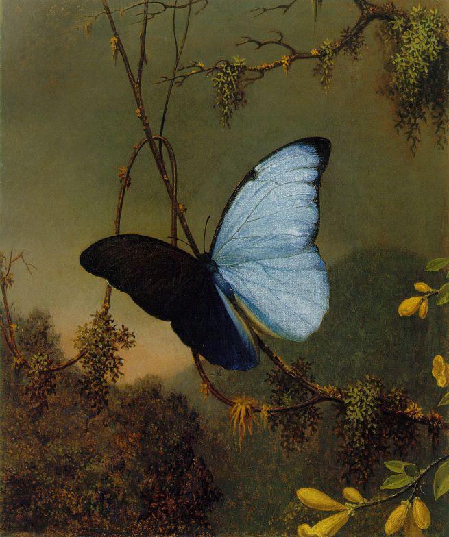 https://upload.wikimedia.org/wikipedia/commons/0/0d/Martin_Johnson_Heade_-Blue_Morpho_Butterfly_ATC.jpg