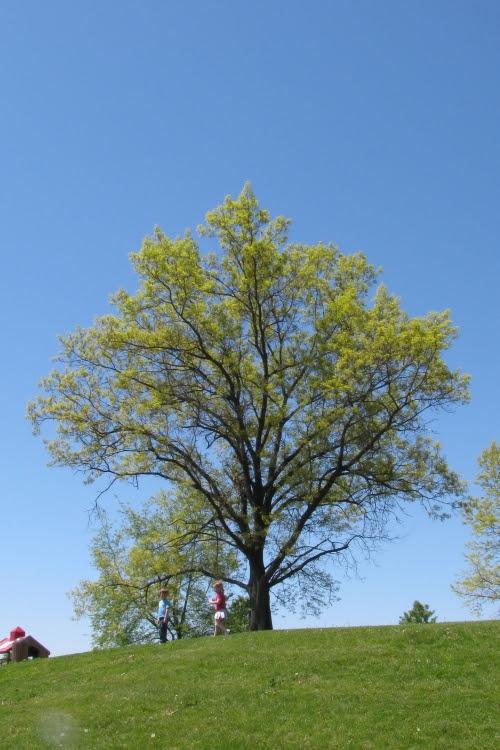 skywatch tree
