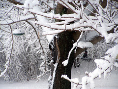 birdfeeders_snow