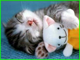 Kucing Lucu Yang Imut