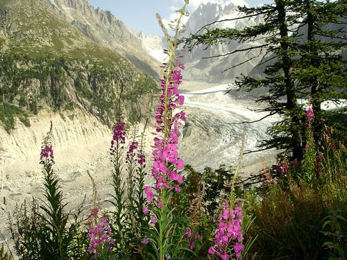 Mer de Glace Chamonix Mont-Blanc
