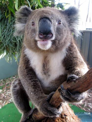 Westhaven Barry by koalawrangler
