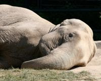 Cameroon, Stop the Elephant Slaughtering