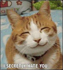 votre chat vous hait