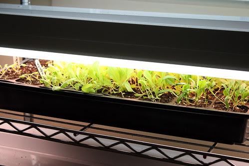 last seedlings of the season 024