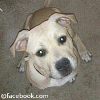 Hartrich family pit bull prior to the pit bull mauling death of Kara Hartrich