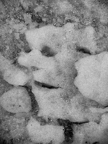 Face In Snow