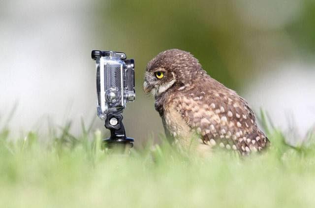 Being A Φωτογράφος άγριας ζωής είναι βασικά για να γίνει ένα με τη φύση