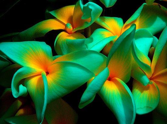20 εκπληκτικά τροπικά λουλούδια απ' όλο τον κόσμο (1)