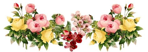 png  flowers   flowerspng transparent