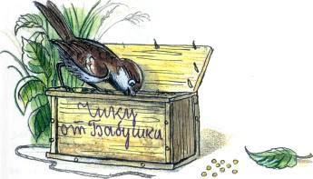 воробей у ящика птица