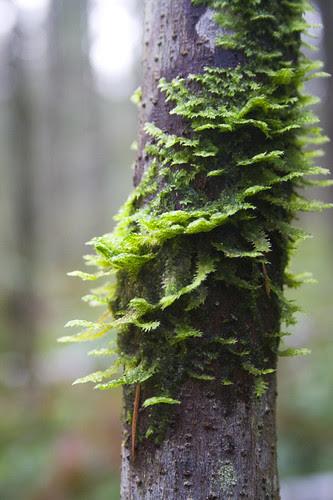 spiralling moss