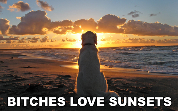 Bitches Love Sunsets Funny Pictures Quotes Pics Photos Images