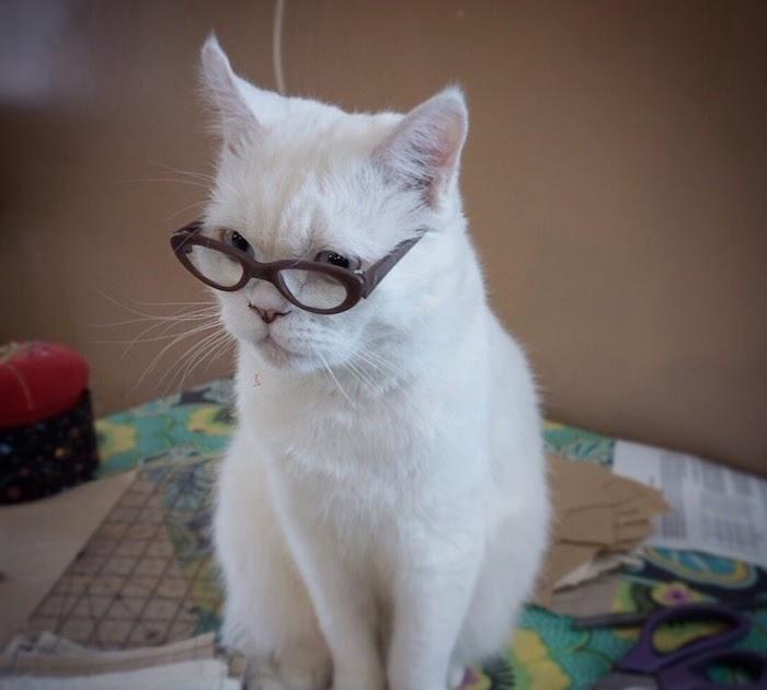 39 katzenbilder zum kopieren  besten bilder von ausmalbilder