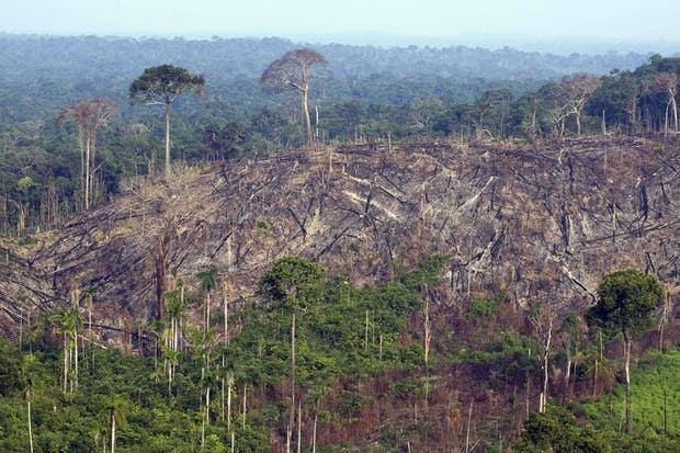 Una vista de la deforestación en el Amazonas
