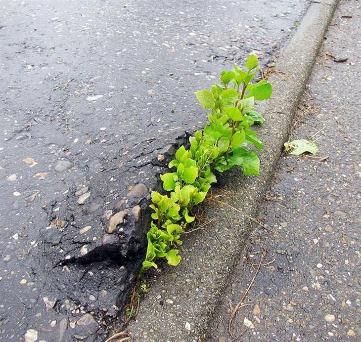 plantas que resistem