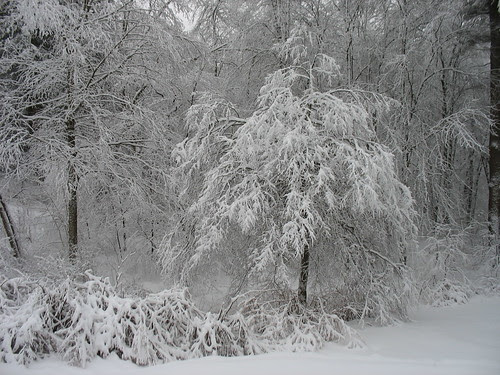 snowy14Jan08-8325