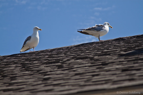 sea gulls on a roof, smiles