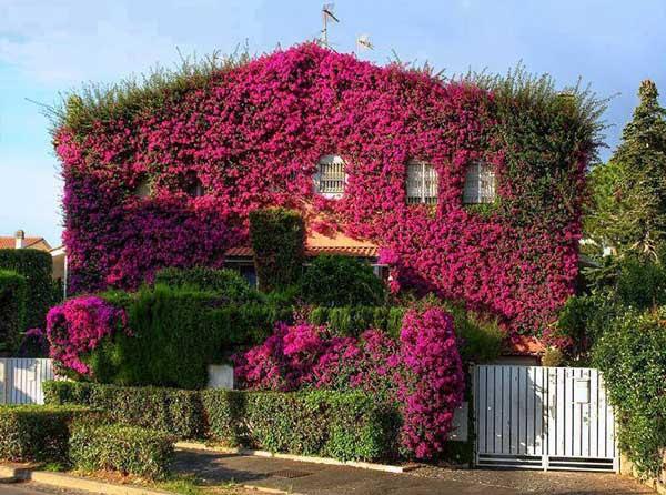 AD-Spectacular-Balcony-Garden-21