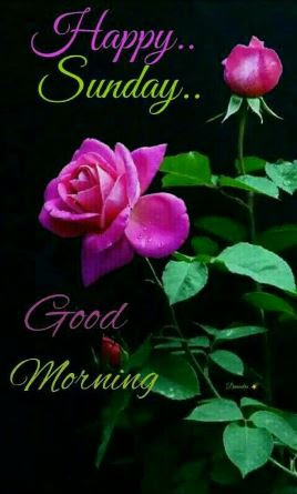 New Sunday Good Morning Images Pics Photo Pictures Download 2019