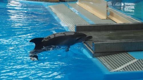 小海豚出世僅20日夭折 海洋公園:不需向外公佈