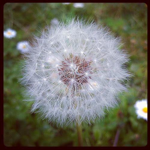 Wish...