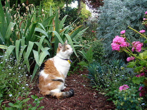 She loves her garden and chipbark