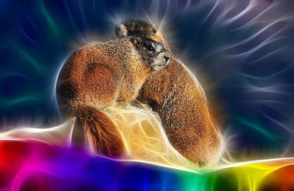 Fractalius Rainbow Marmots
