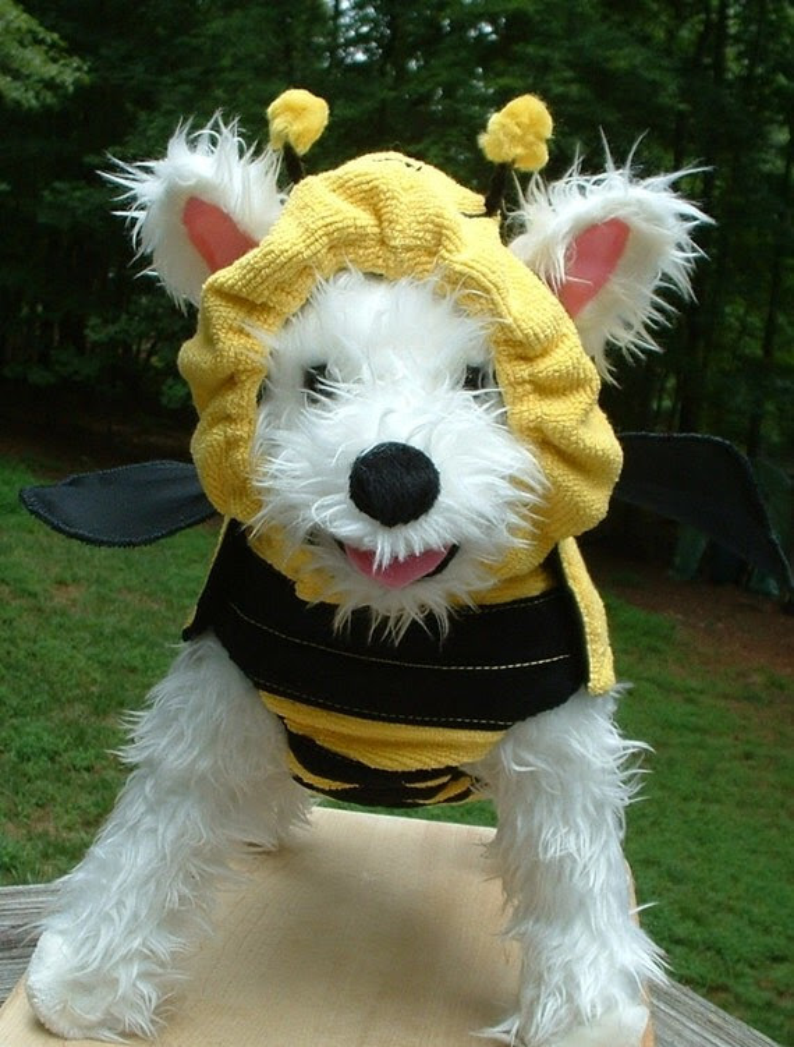 Bumblebee Dog Costume-----Bright Yellow n Solid Black -----Striking Pet Costume----Yorkie size Dog Jacket n Hat