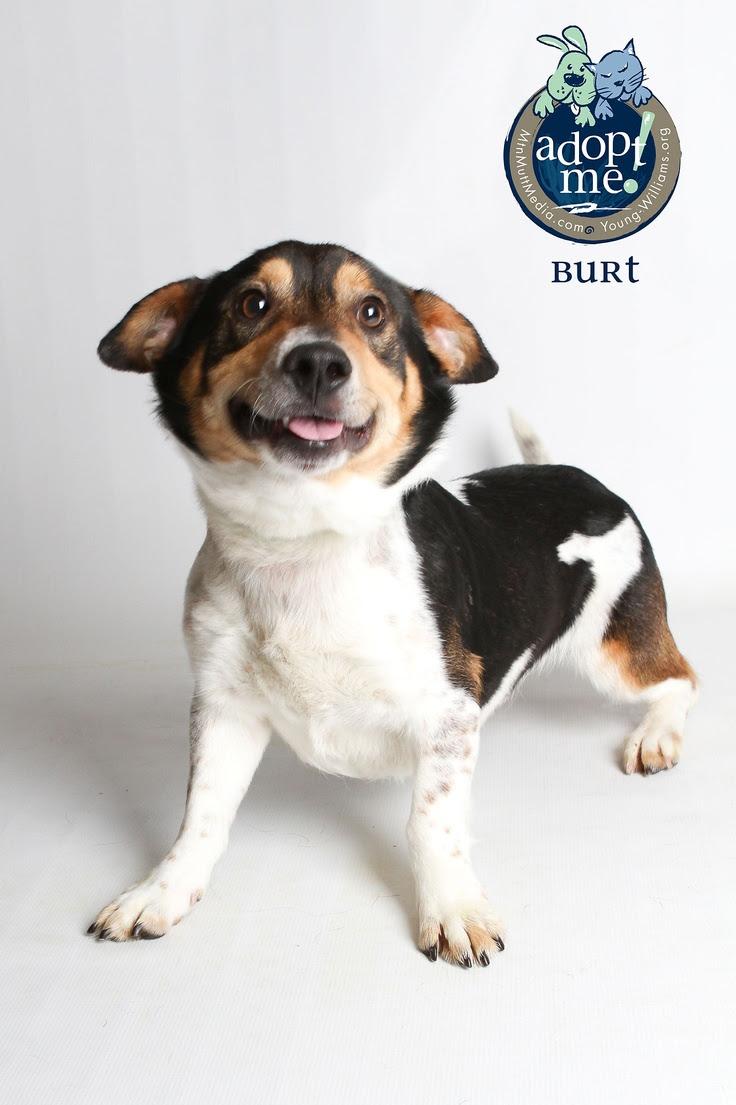 Puppies For Sale Near Me Newfoundland And Labrador Canada