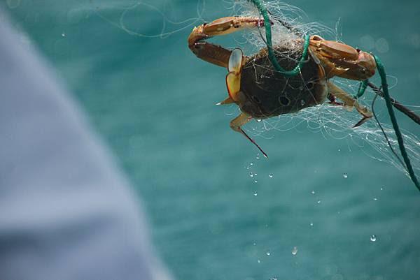 歐船長東海休閒漁業