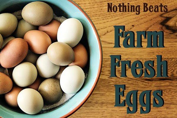 Farm Fresh Eggs From Shooting Star Equinine Center ...