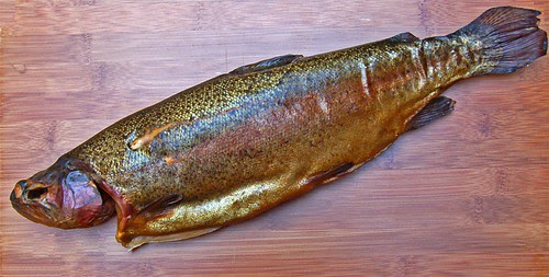 smoked trout© by haalo