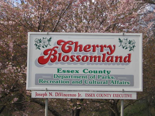 Cherry Blossomland sign