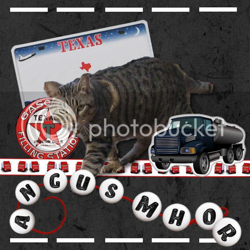 Pixie Bob,Tabby Cat,Road Trip
